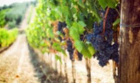 Yarra Valley Wine Tasting