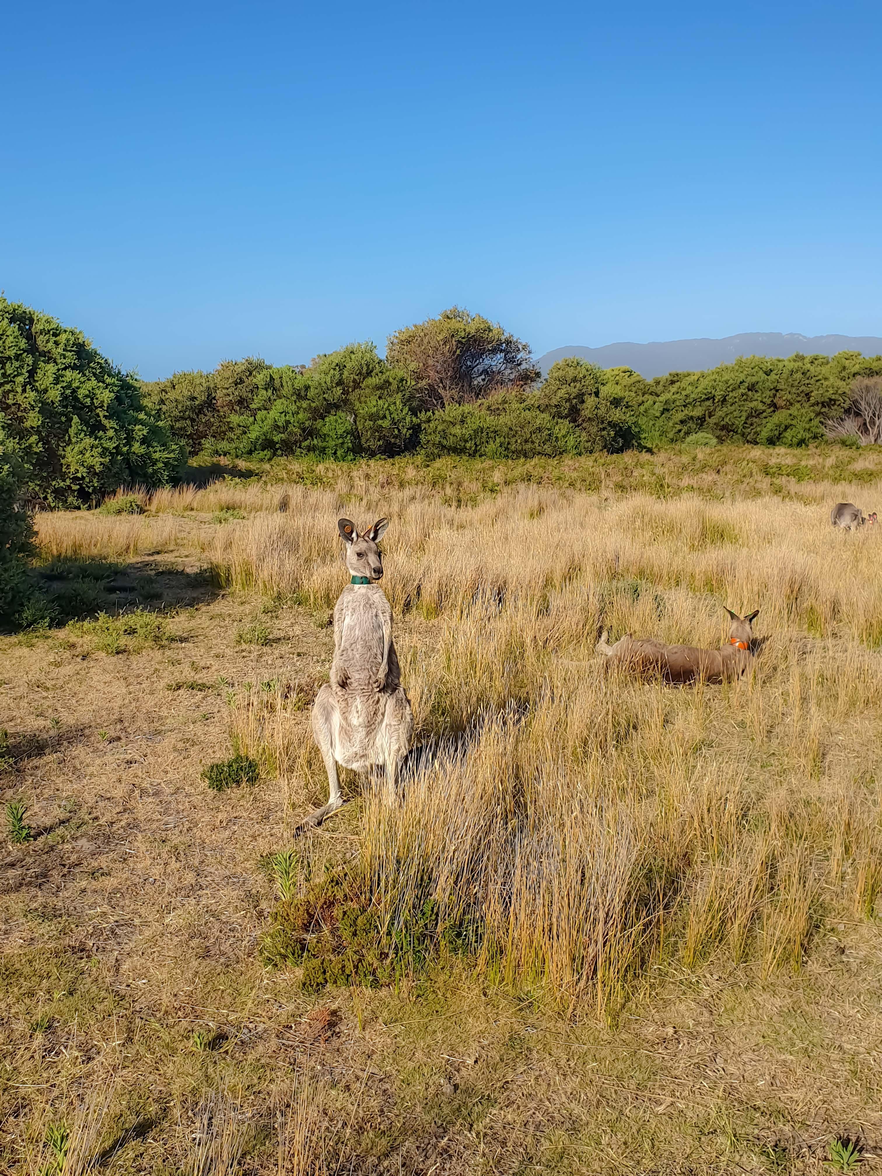 Wild Life - Wilson Promontory National Park