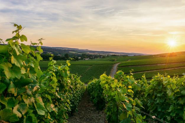 yarra valley  wine  tasting  tour