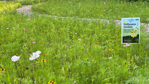 meadow flowers.jpg