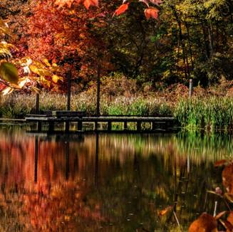 Dock in fall.jpg