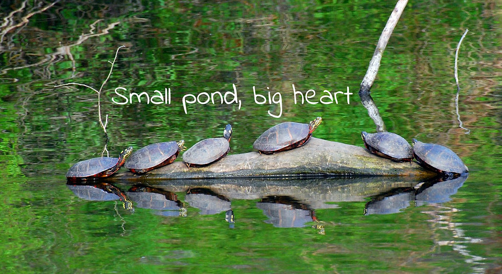 TurtlesOnLog.jpg
