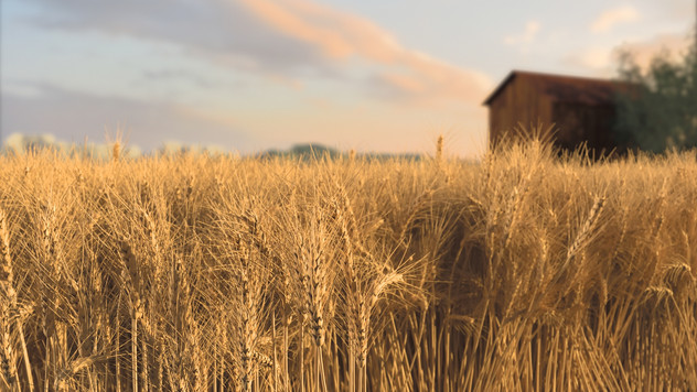 Procedural Wheat Field