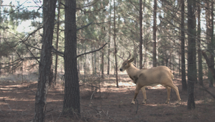 Rule of Rescue | Work in Progress Deer Groom and Slap Comp