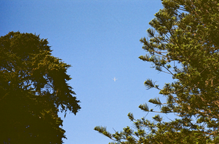 plane_in_trees.png