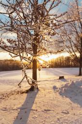 snowdays_1-17.jpg