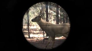 Deer Live Action Integration