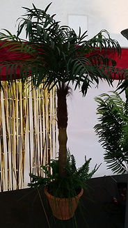 Palm Tree | Dallas Event Services