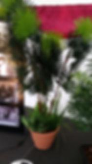 Plant Hire | Dallas Event Services