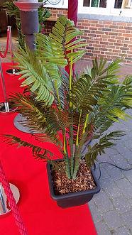 Palm Tree | Dallas Event Services