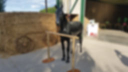Black Horse Prop | Dallas Event Services