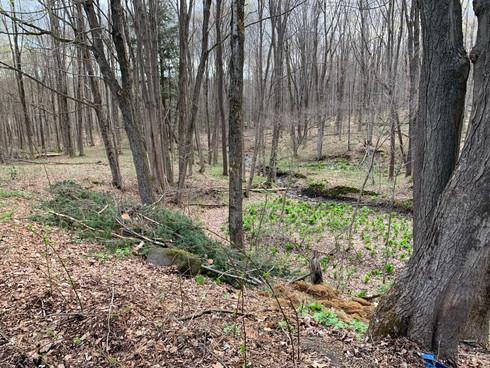 Creek & Woods