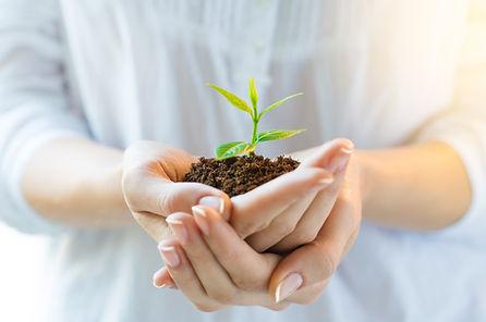 La philosophie du Champ de l'Être est semblable à une petite pousse que l'on tient au creux de ses mains pour en prendre soin et la nourrir
