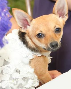 Fraley Wedding