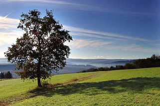 5.-Morgenstimmung-Volnsberg.jpg