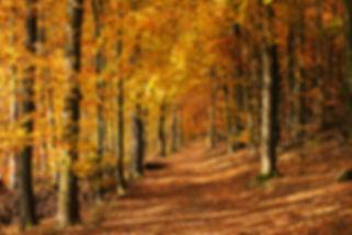Herbst-am-Häusling-105x70cm.jpg