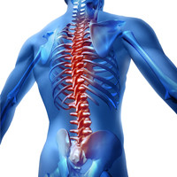 human spine graphic
