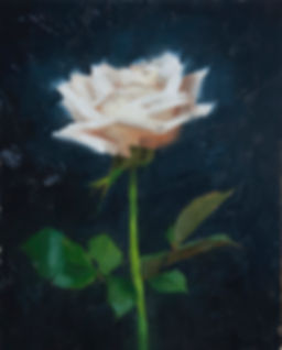 single white rose 8x10.JPG