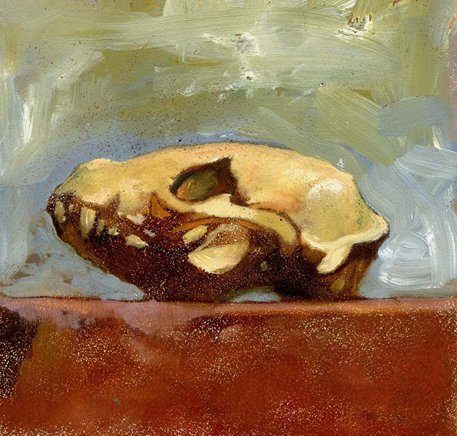 raccoon-skull
