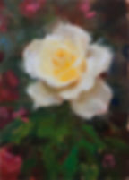 huntington_yellow_rose_9_26_19_2.JPG