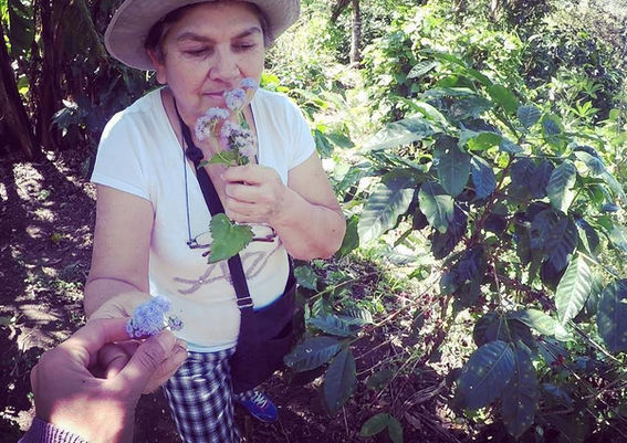 TerraLupa Story: Hermida's Coffee Farm