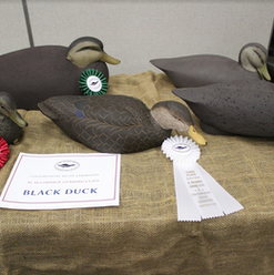CDE 11 - Black Ducks.png