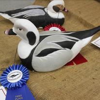 CDE 33 - Wheeler Sea Ducks.png