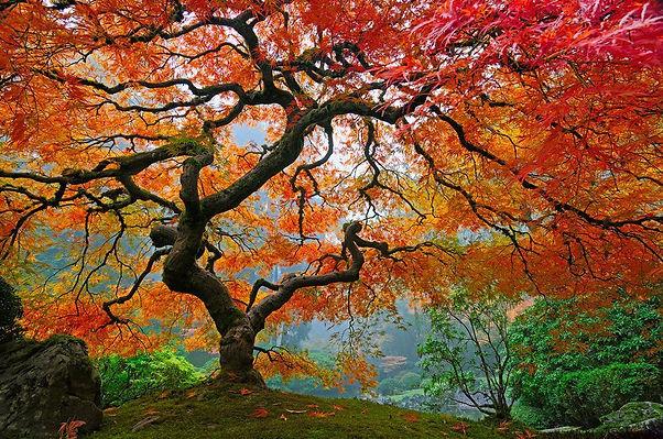 les_plus_beaux_arbres_du_monde_oregon_portland_jardin_japonais.jpg