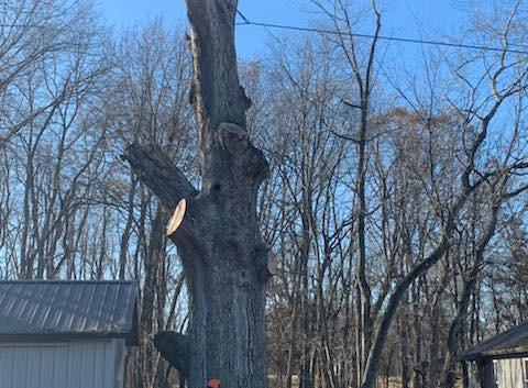 Tree Removal 3.jpg