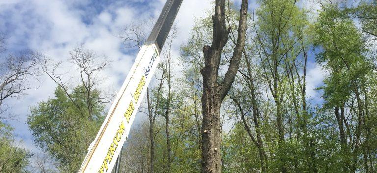 Tree Removal 4.jpg