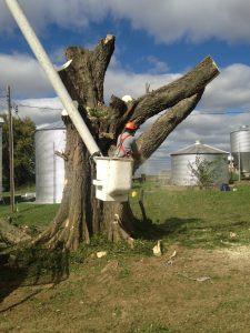 large-tree-removal.jpg