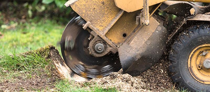 Stump Grinding Services.jpg
