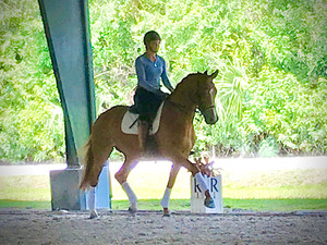 """""""Ferinet"""" FEI Mare v. Scandic Finds New Partnership in Canada"""