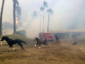 DONATE: Devastating Fires in CA Affect Horse Community