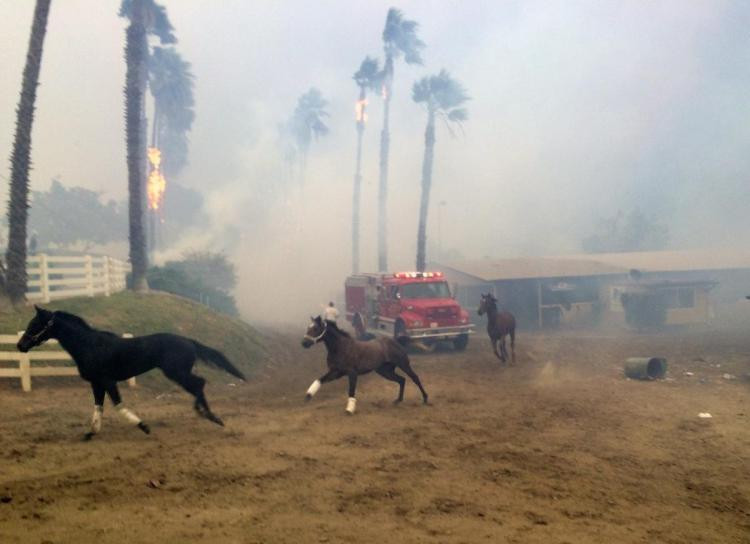 Lilac Fire Race Horses Devastating Loss for Horse Community