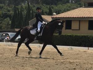 """AA Rider/Owner wins with 70% in first season at Intermediare with DHS imported """"Black Velvet&qu"""