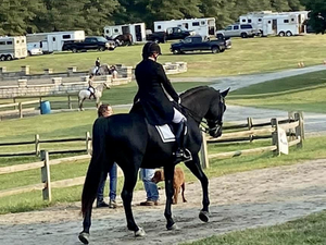 """""""Hit Master DHS"""" Earns Owner/Rider Susan Lynch her USDF Bronze and Silver Medals"""
