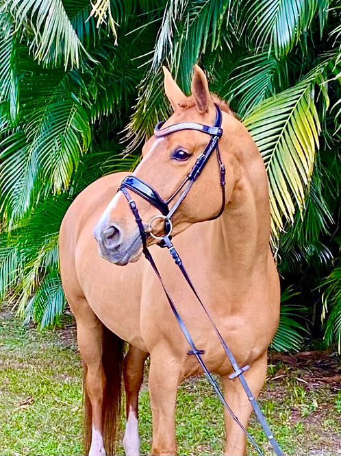 2010 KWPN Mare Ready to Compete PSG, Talent for Pi/Pa
