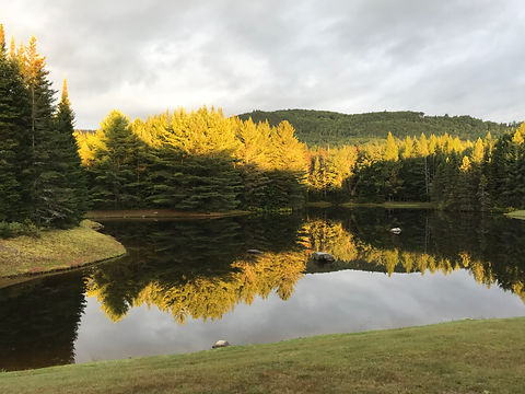 Morning on the Pond.JPG
