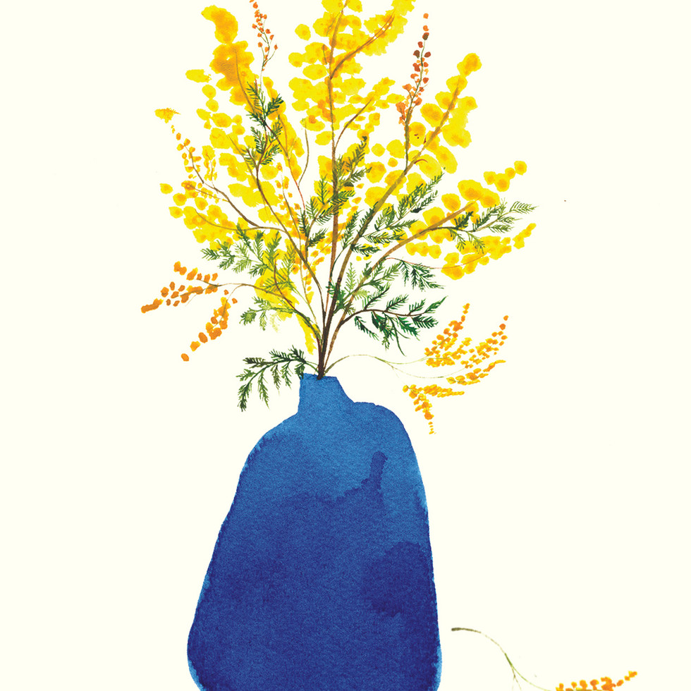 Mimosa In Blue Vase