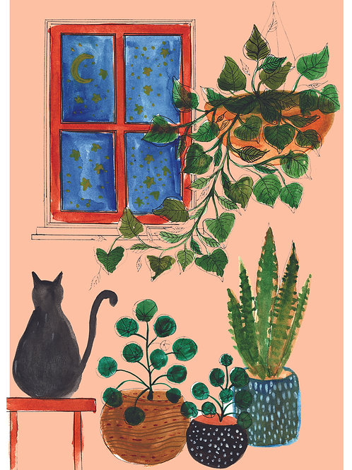 House Plants with Cat