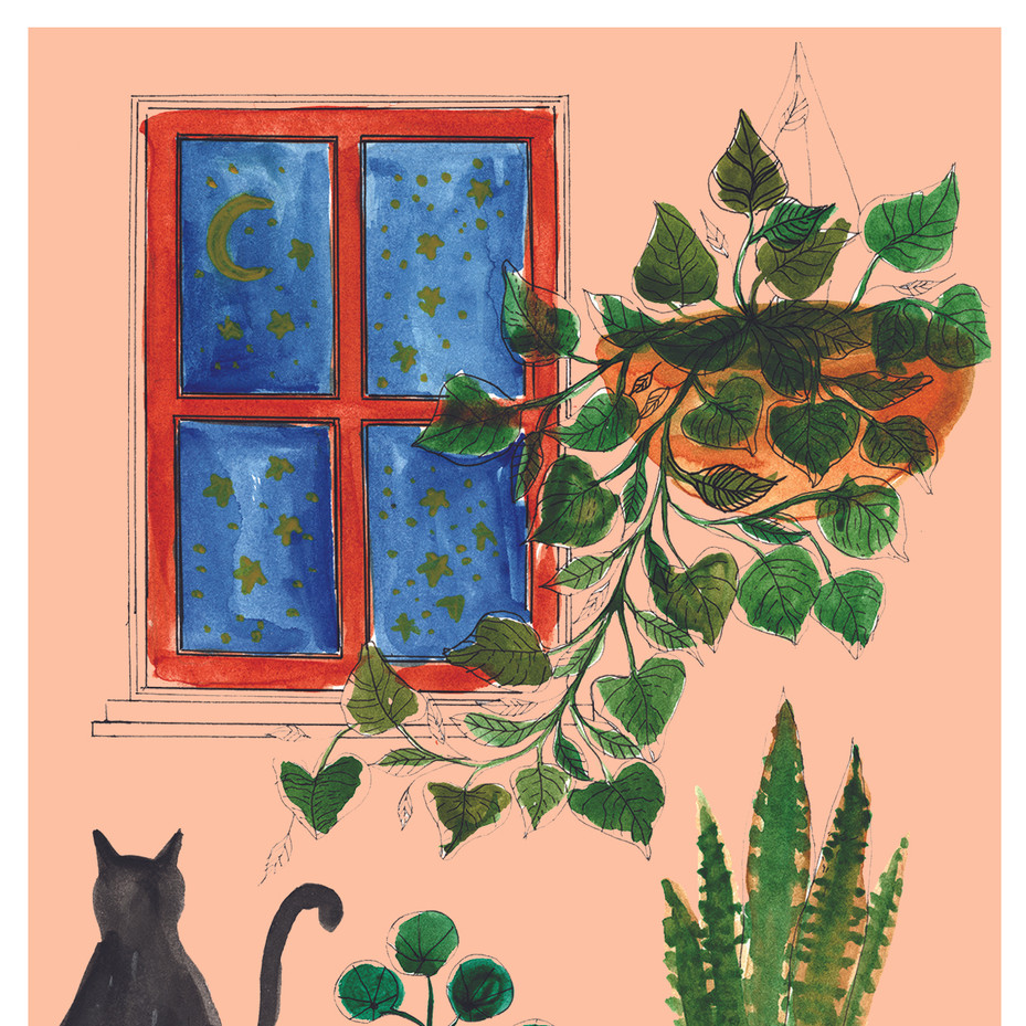 House Plants and Cat