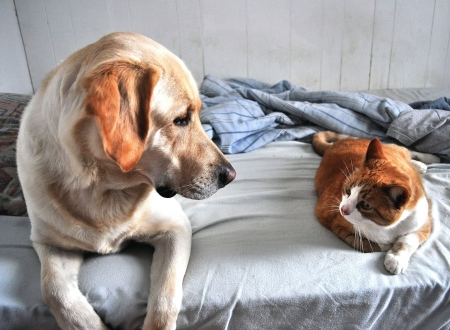 17588362_s - dog and cat on the couch