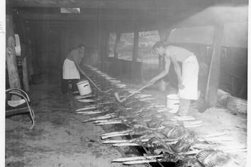 Sheep Bake 1948.jpg