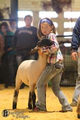 SheepShow.jpg
