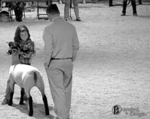 LambShow.jpg