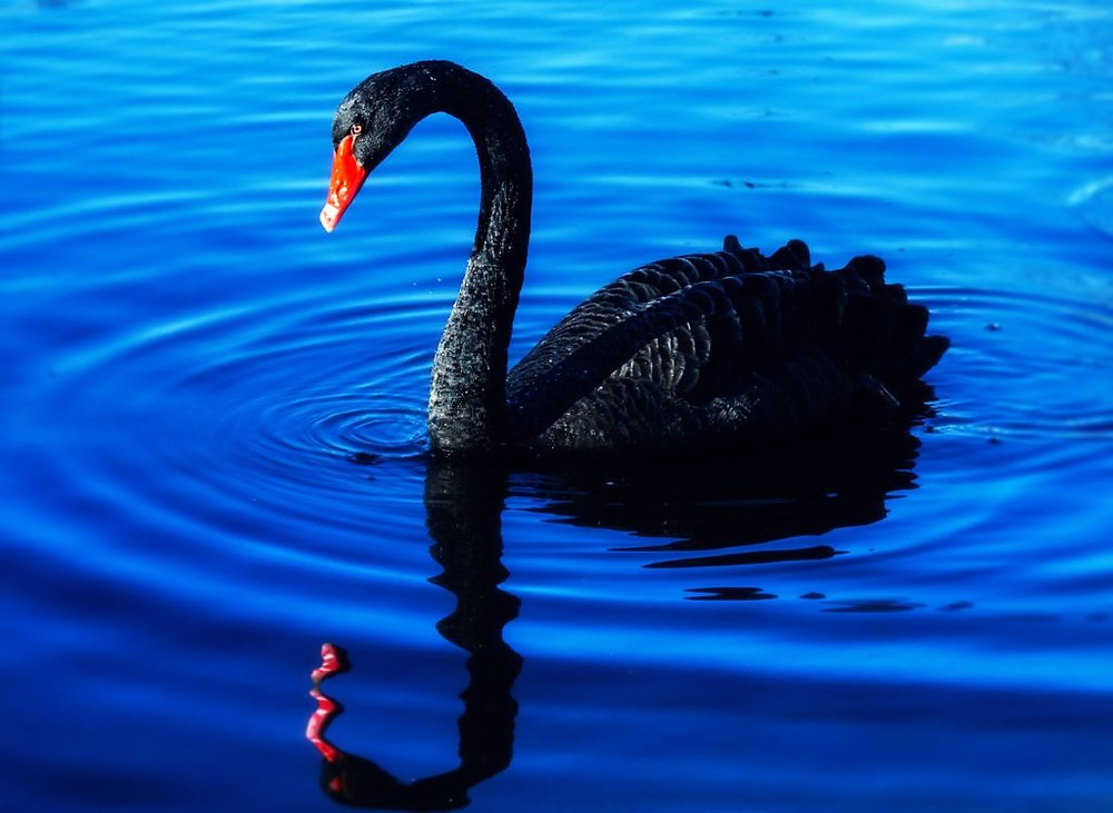 Akin investment suggests a Black Swan event may occur at Jackson Hole