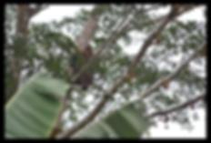 SK_orangutan.png