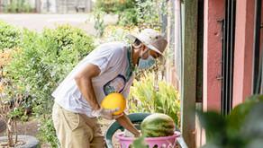 [ES] Un Tributo a Guanacaste