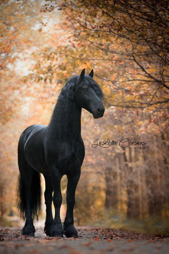 paardenhaar sieraard